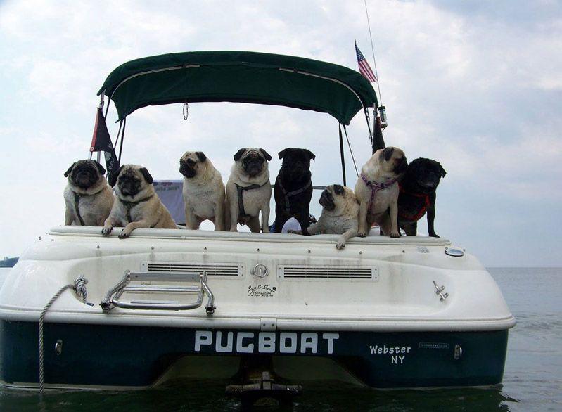 A bordo con nuestros mejores amigos